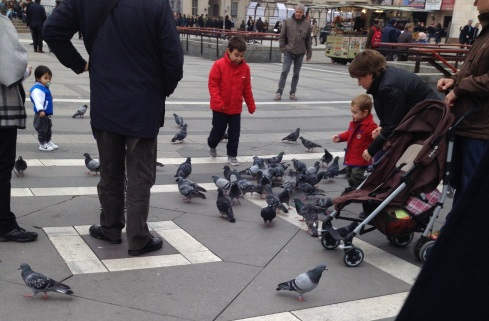 Pigeon Chasing #Milan #Italy | www.the-wild-child.com