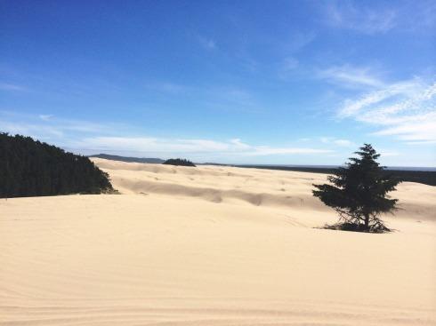 Sand Dunes | www.the-wild-child.com
