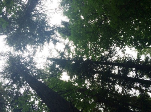 spencer butte trees | www.the-wild-child.com